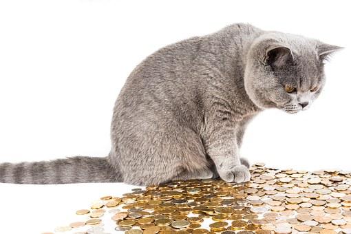 Katzenbanker