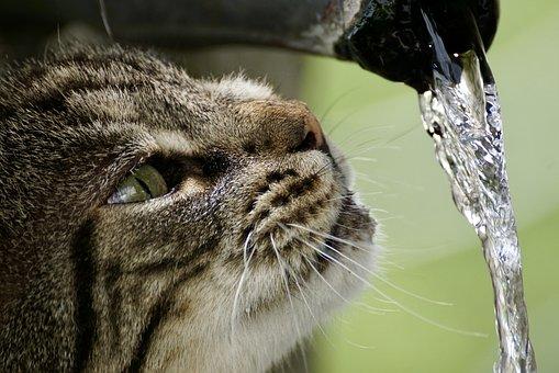 Wasser und Katze