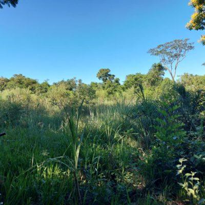 Wald und Wiese