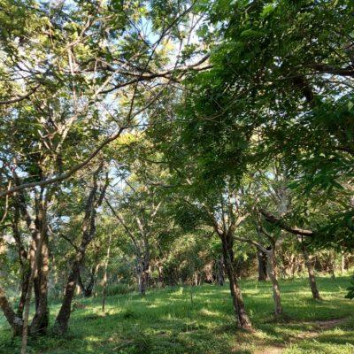 Nutzbäume