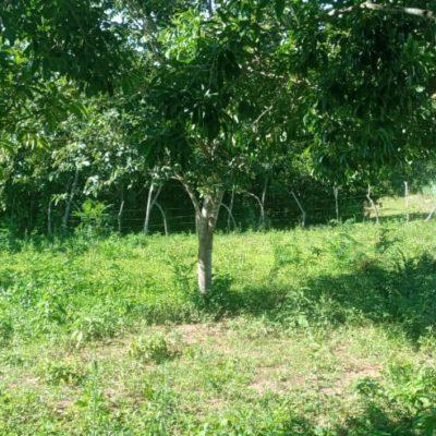 Wiese und Bäume 2