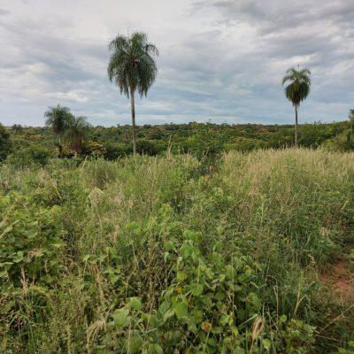 Landschaftsblick mit Palmen